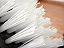Particolare delle setole spess.mm1,2 L.mm 60